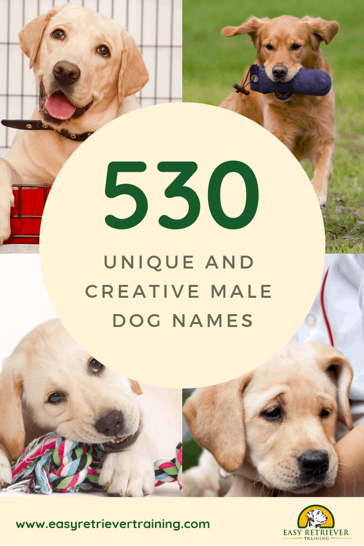 530 Unique And Personal Male Dog Names Easy Retriever Training